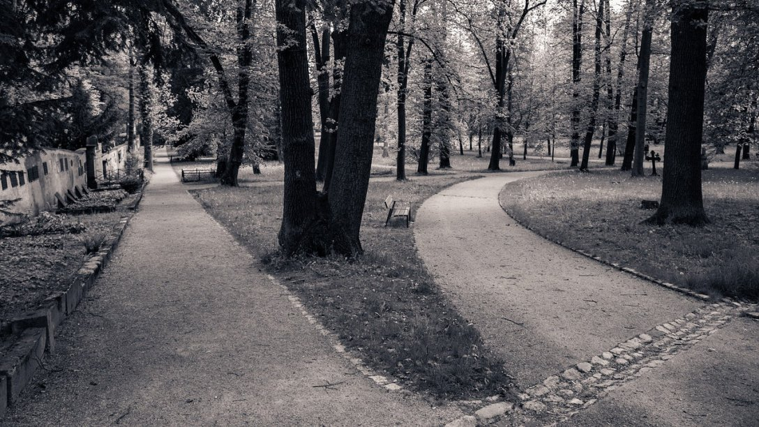A black and white photo of two paths in a park or forest. A lot of trees are visible throughout, and a park bench is on the side of the path to the right. It curves to the right, while another path at the left goes straight.