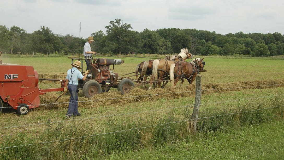 A couple of Amish men farming.