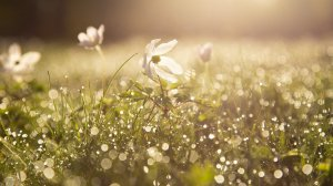 A field of spring flowers with dew all over them.