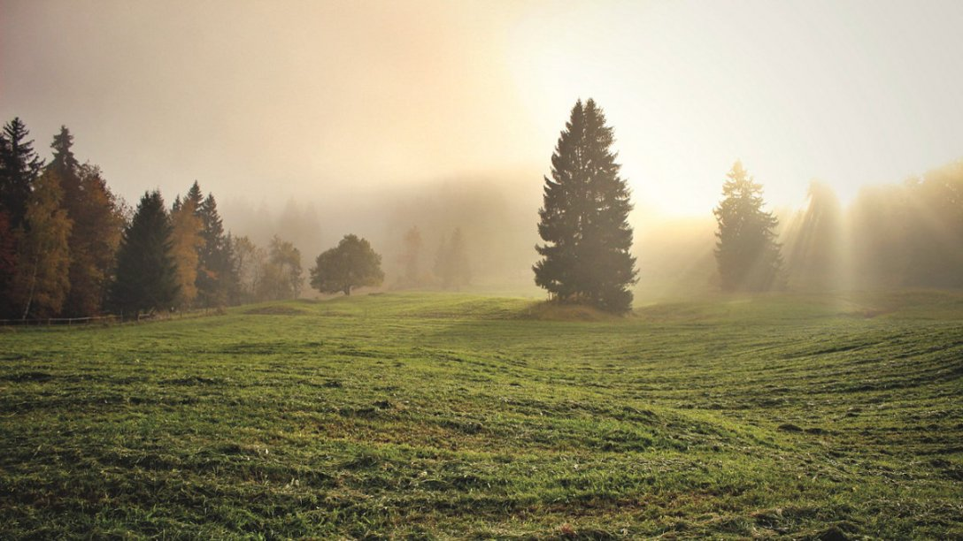 A field of grass and trees bathed in sunlight.