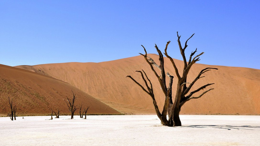 A tree in a desert in Africa.